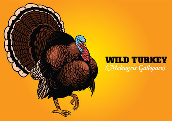 wild turkey in hand drawing style