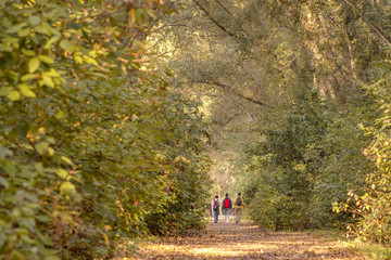 Pathway in the autumn forest, group of friends walking in the colorful nature