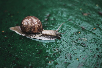 Snail crawling on concrete