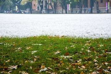 Snowy day in autumn and snow above the grass with the fallen leaves.