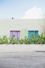building with colored panels and cactus pad plants