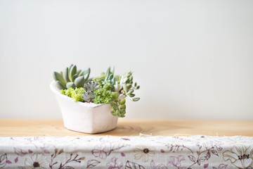 Small potted plants on case in home
