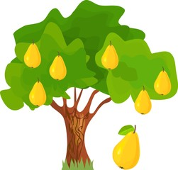 Pear-tree with green leaves and ripe yellow fruits on white background