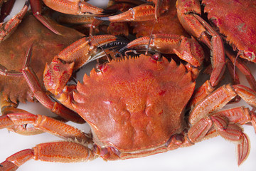 seafood, crabs isolated on white