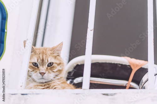 Chat Roux Sur Un Balcon Stock Photo And Royalty Free Images On