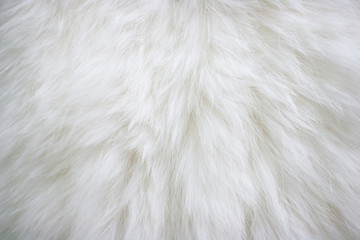 Texture of natural long-haired white fur. Wall mural