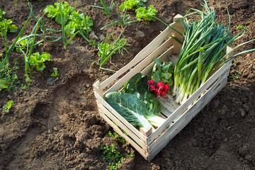 Spring vegetables from the garden