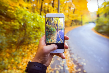 Man taking picture of yellow foliage in the forest, landscape in autumn with phone