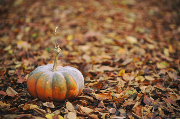 Pumpkin on the background of fallen leaves.  Space for text.
