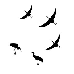Flying isolate cranes vector graphic