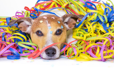 party celebration dog