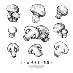 Champignon mushrooms vector sketch collection. Whole and sliced edible mushroom isolated, single and groups, engraving on white background.