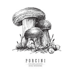 Cep mushroom vecor sketch illustration, porcini boletus with forest accessories: moss, plants, acorns.  Edible mushroom isolated engraving on white background.