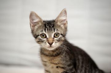 striped kitten on a light background