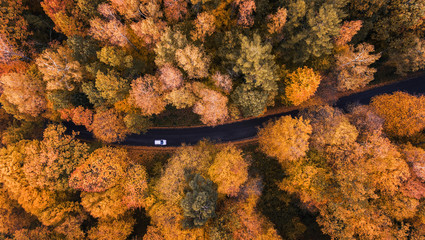 High angle view of a road trough the autumn forest with copy space