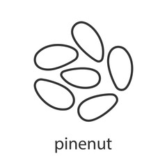 Pinenuts linear icon
