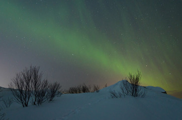 At night in the winter hills,tundra and trees and in the sky the stars, Aurora.