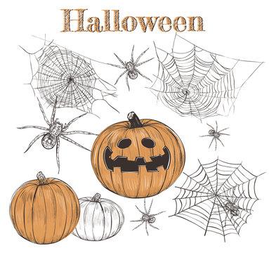 Halloween Set Pumpkin Sketch, Spider Web, Spiders. Collection of hand drawings on Halloween. Halloween vector illustration