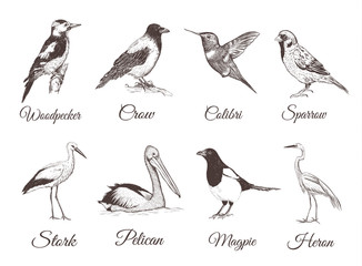 Birds set sketch. Collection of birds. Hand drawing vector illustration for design.
