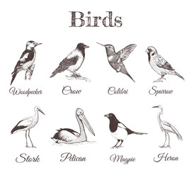 A collection of sketch drawings of birds. Illustrations for your design. variety of birds Magpie, Crow, Hummingbird, Pelican, Sparrow, Stork, Heron, Woodpecker.