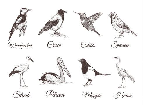 Birds set sketch. Collection of birds. Hand drawing vector illustration for design.
