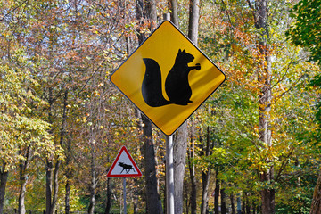 "Yellow sign with a picture of squirrel with nut and warning sign ""Caution, moose"" in autumn park"