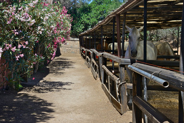 view of little paddocks with a canopy and horses inside