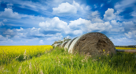 Hay and Canola
