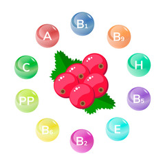 Vector illustration. Red currant. Garden berries. Infographics. Vitamins.