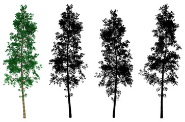 3d rendering. High and slim pine tree with several black alpha mask on white background
