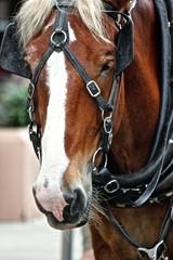 Work Horse 2