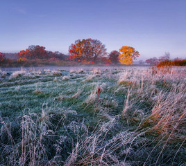 Scenery frosty autumn. Morning landscape of meadow with hoarfrost and colored trees on horizon. Fall frosty morning.