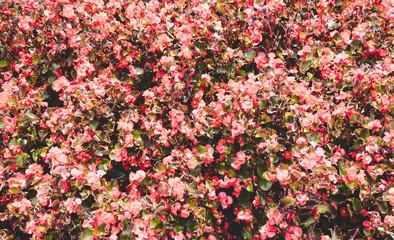 red green flowers arrangement