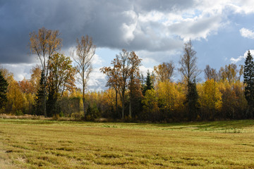 countryside fields in autumn with lonely trees