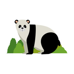 wild bear panda with bush