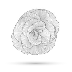 Printed roller blinds Spiral Abstract floral background. Vector flower rose. Element for design.