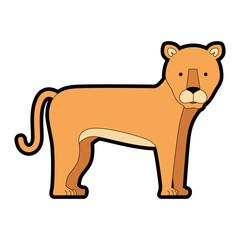 wild and big lion female