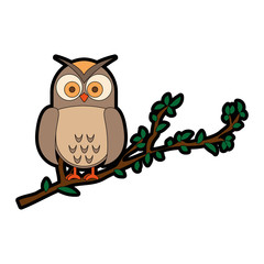 owl bird in branch