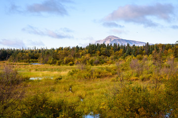 Path through a marsh in a fall Alaskan landscape, with a mountain and sky in the background