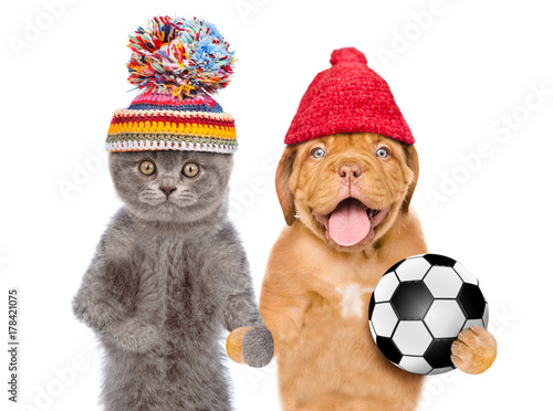 2d6beb20ee4 Cat ad dog in warm hats holds a soccer ball. isolated on white background