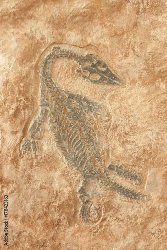 Fossil of prehistoric lizard skeleton on the rock