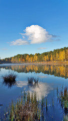 autumn morning. Yellow forest and blue sky with white clouds reflection on the mirror water on the forest lake
