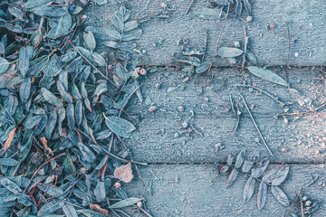 The fallen leaves of the trees froze on a wooden background.