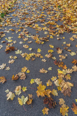 Leaves on the road