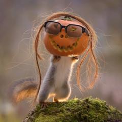 squirrel inside pumpkin with sunglasses