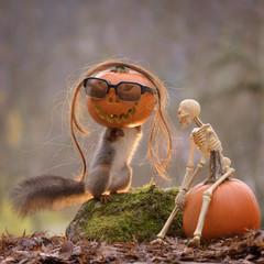 squirrel inside a pumpkin with skeleton