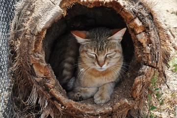 African wild cat mother