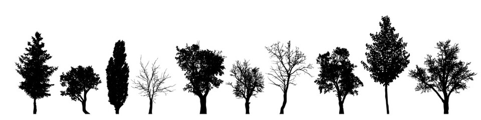 Vector silhouette of tree on white background. Wall mural