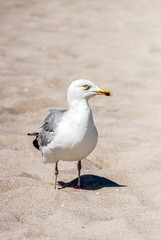 Fototapete - Möwe am Strand