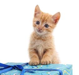 Kitten and gift.